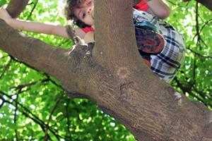 Treeclimber by Liam