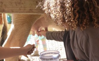 One of our students learns to milk a cow.